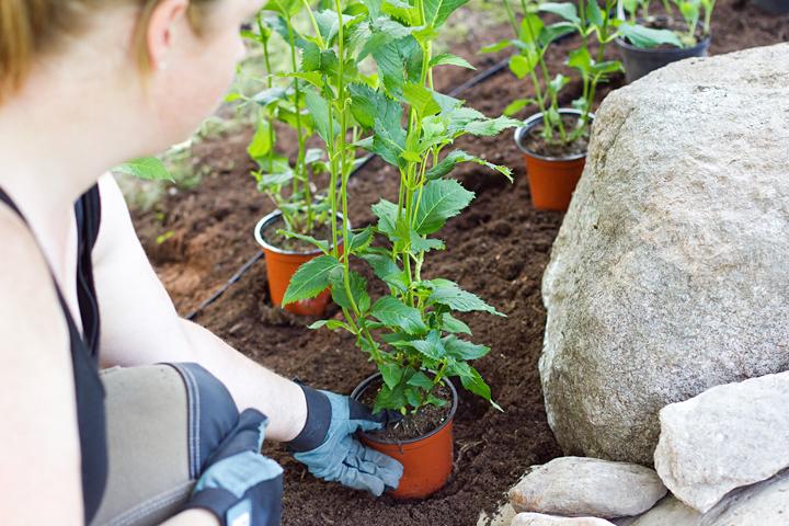Fotografering Trädgårdsdesigner
